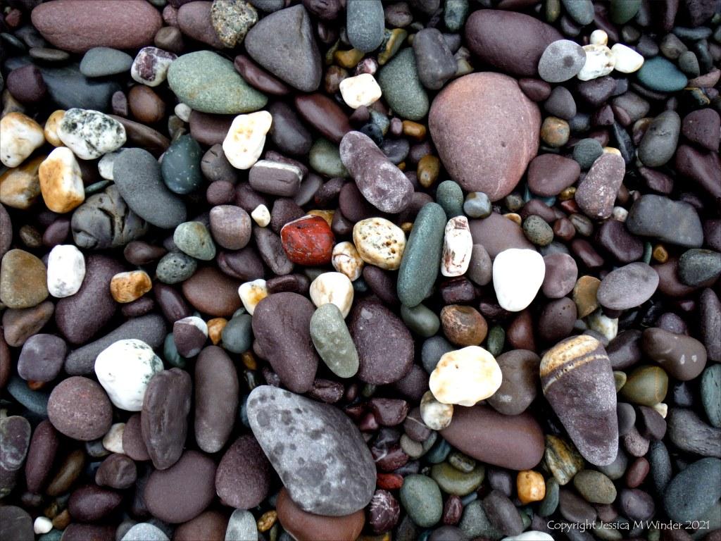 Coloured wet pebbles on the beach
