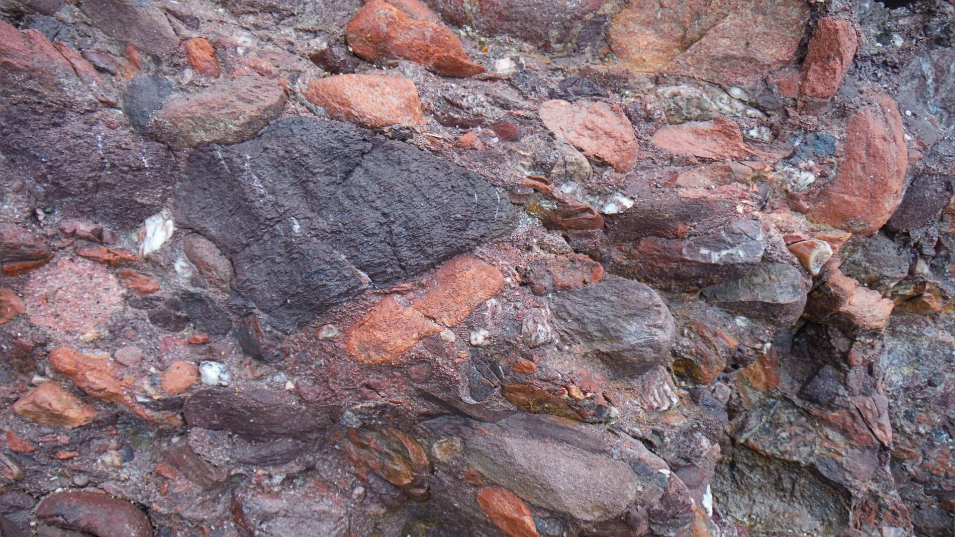 Devonian conglomerate at Trabeg on Dingle in Ireland.