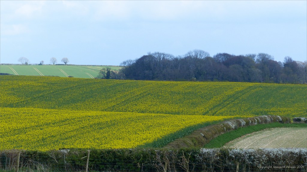 Scene from an April country walk in Dorset