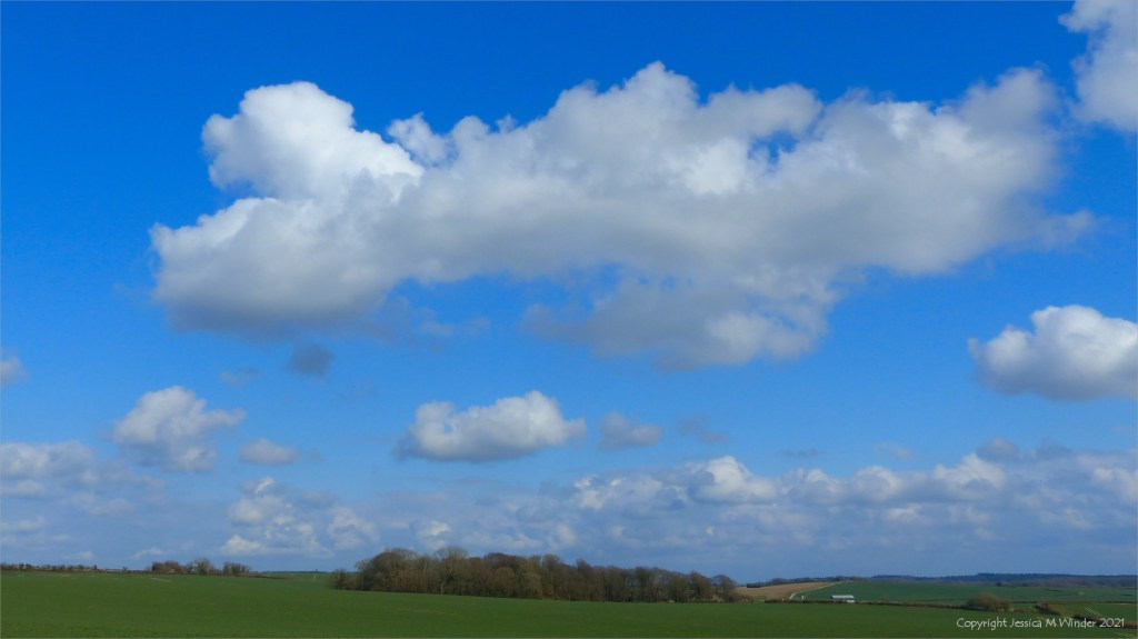Fields, trees, blue sky and white clouds