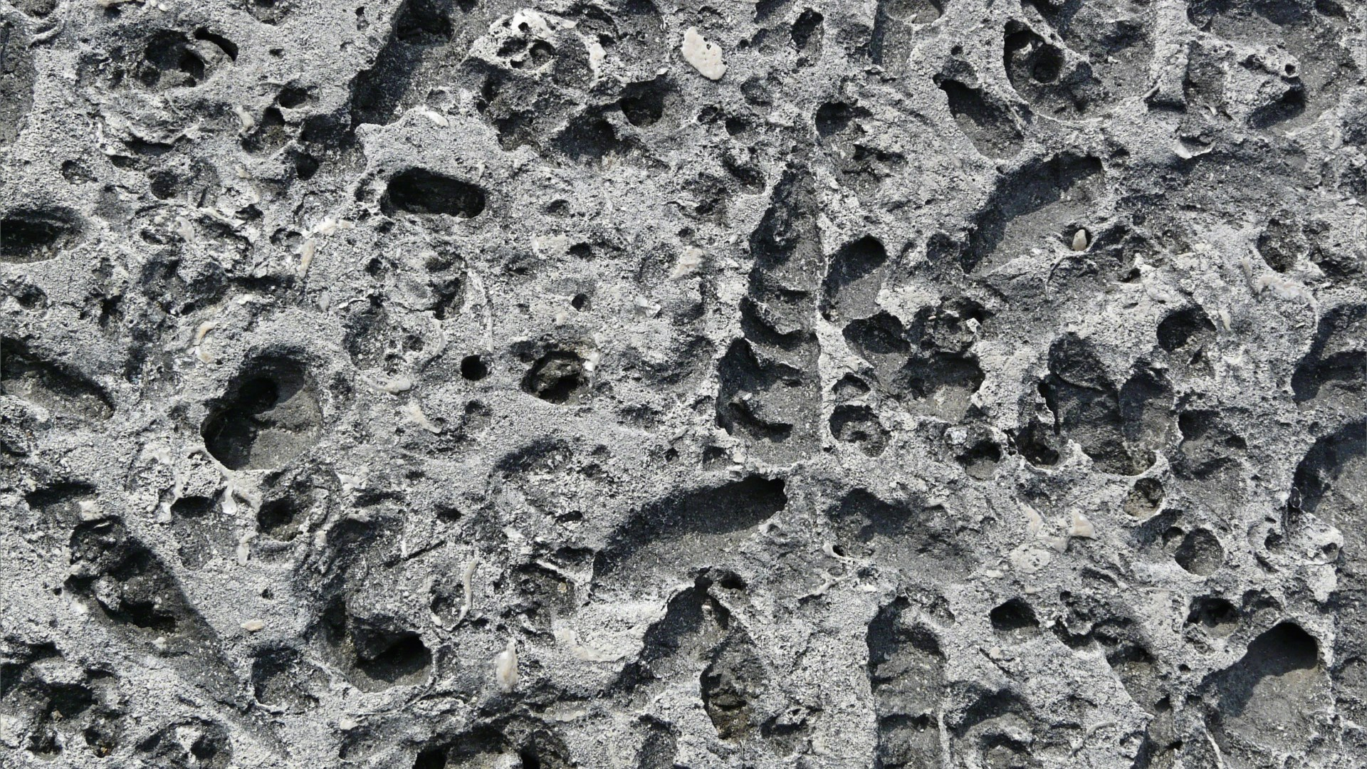 Close-up of a stone block in a sea wall with shaped holes left by erosion of shell fossils
