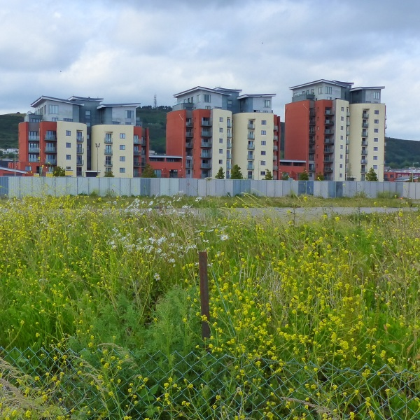 Wild flowers on wasteland and buildings against a dark sky