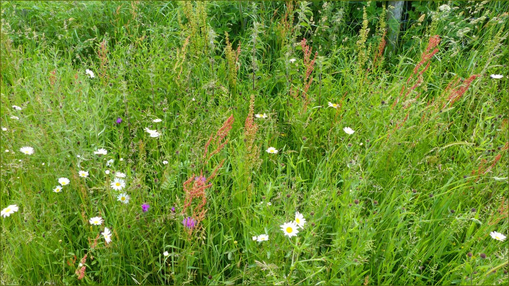 Grasses and flowers in a meadow