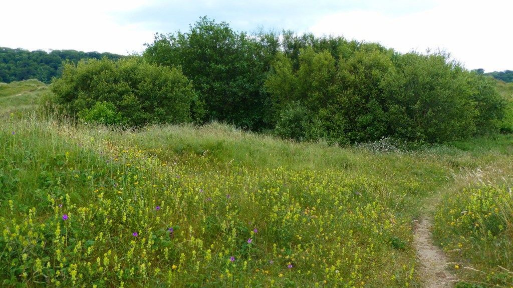 Yellow Rattle flowers growing with pink orchids on grassland