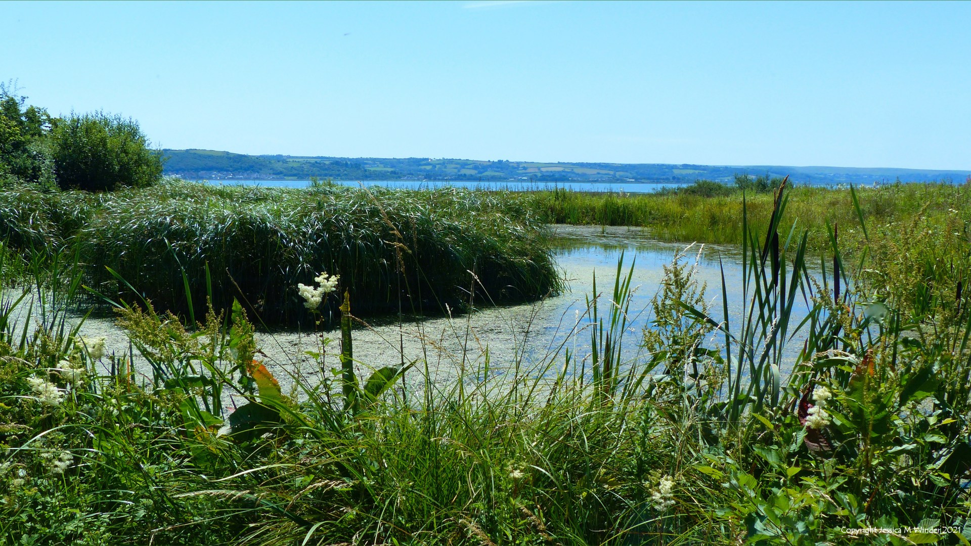 Pond, rushes, and wetland vegetation with sea and sky