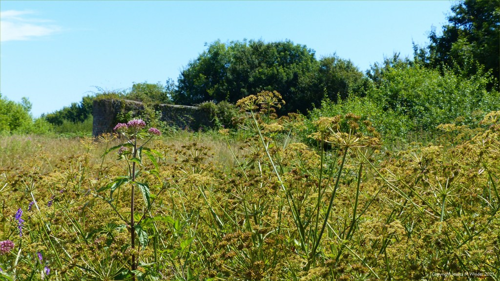 Flowering plants and other vegetation on a wetland site in South Wales