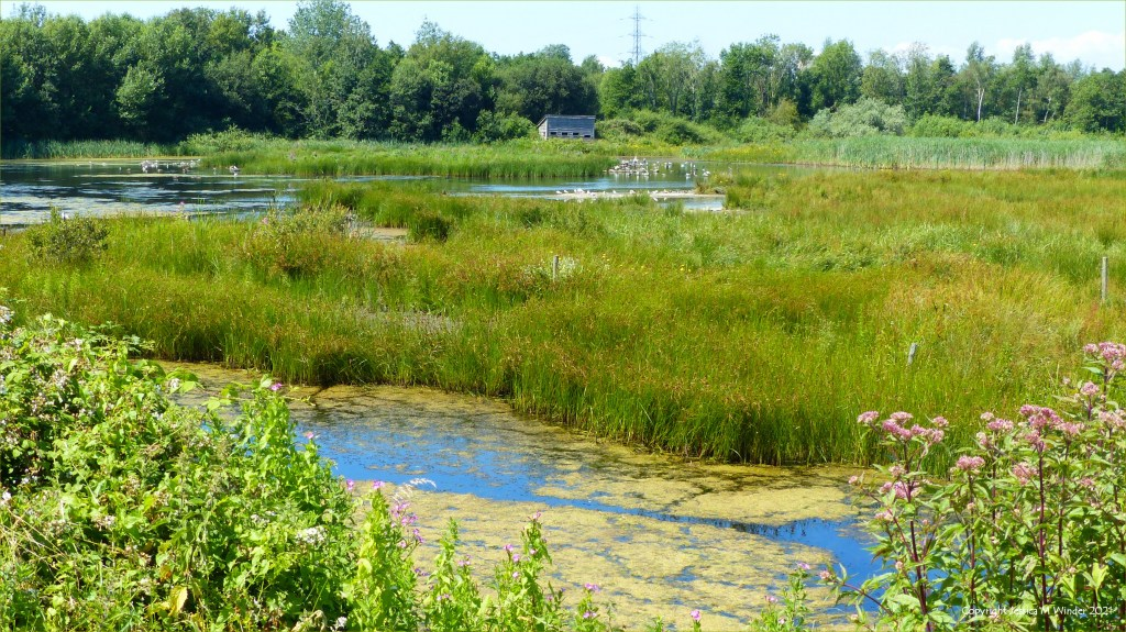 View of bird-hide and wetlands with lake