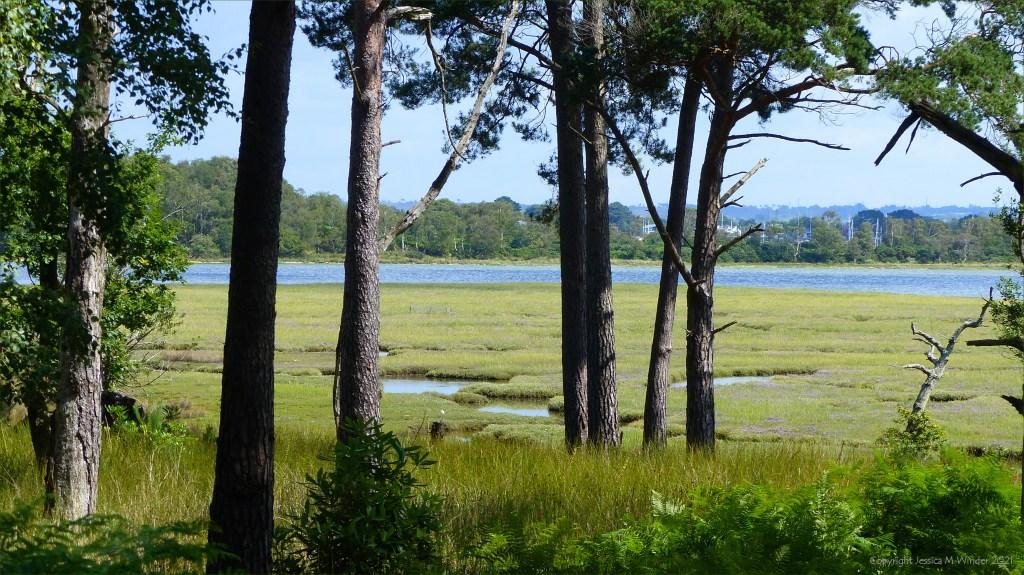View of salt marsh through trees
