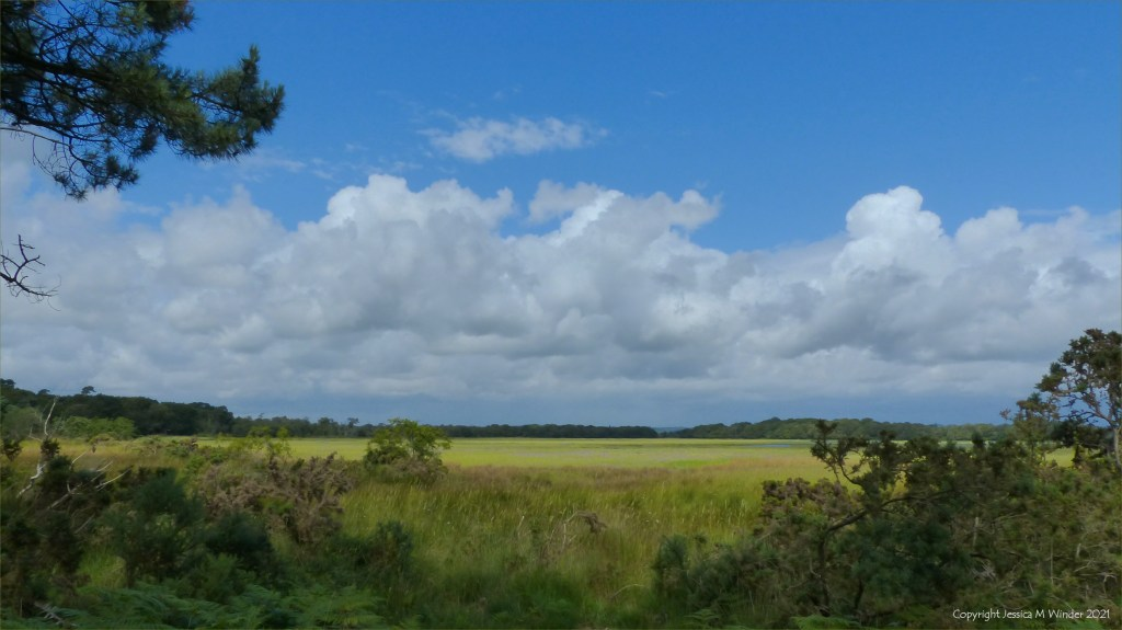 View of salt marsh on the edge of Poole Harbour in Dorset.