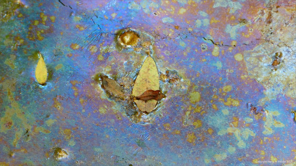 Iridescent bacterial film on the surface of a stagnant pool